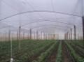 Полиетилени за оранжерии  Ginegar /Израел/