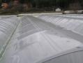 Полиетилен за оранжерии SSEL CLEAR /Анти-капка/ 125 mic